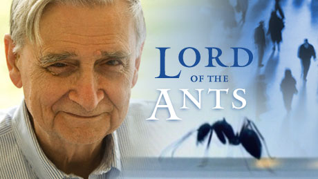 lord-of-ants-prog